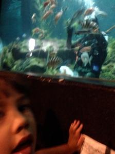 Visiting the National Aquarium in Napier